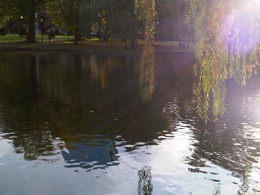 Boston-Autumnal-Afternoon