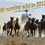 Horses_Running_Wild