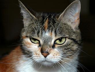 Legacy Cat