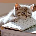 Bored BPO Cat